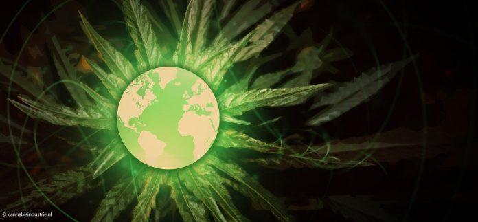 cannabis industrie canada vs internationale cannabismarkt KvK Canada VS wereldwijd medicinale cannabis industriële hennep legale cannabis verkooprecords