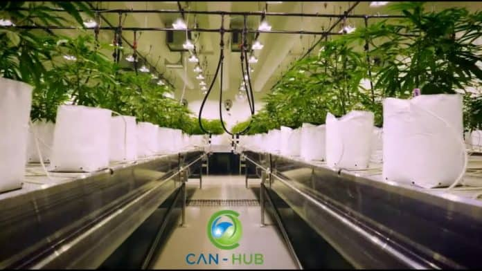 can-hub royal brinkman webinar