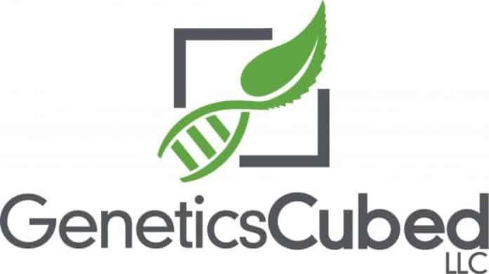 GeneticsCubed patent CBD cannabinoïde cannabichromene