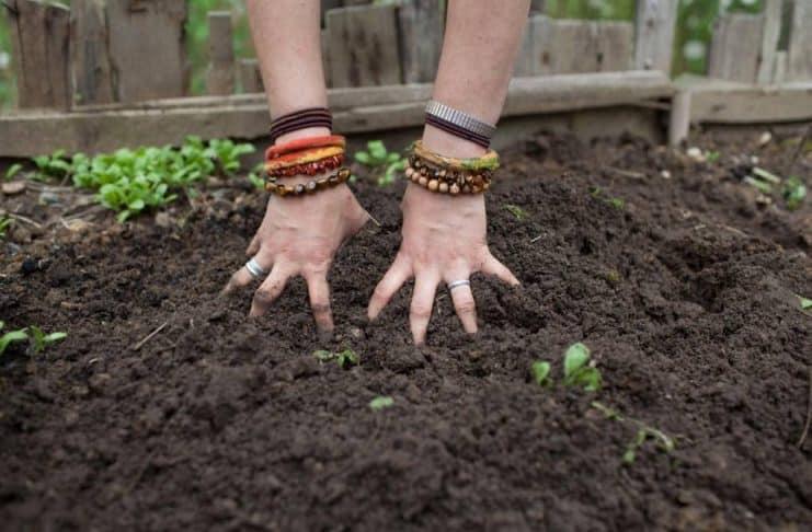 organic earth biologisch organisch biodynamisch ecologisch cannabis kweken