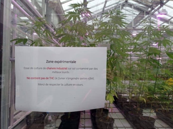 Leuven België Katholieke Universiteit KU Industriële hennep onderzoek bodem reinigen
